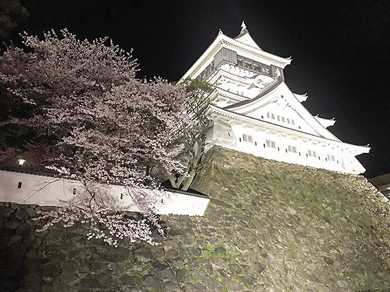 北九州市小倉北区にある小倉城と桜の画像